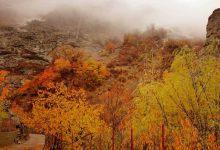 تصویر روستای امامه  تهران
